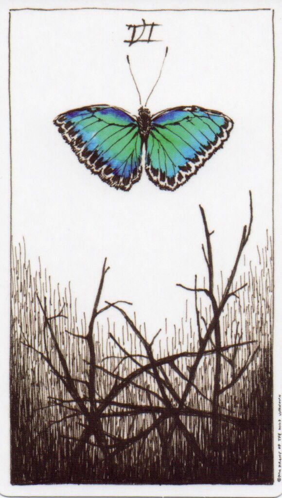 Image result for 6 of wands wild unknown