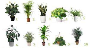 Le piante contribuiscono a disintossicare, rinfrescare e depurare l'aria di casa, e sono capaci di [Leggi Tutto...] L'articolo Le piante che purificano l'aria di casa secondo la NASA sembra essere il