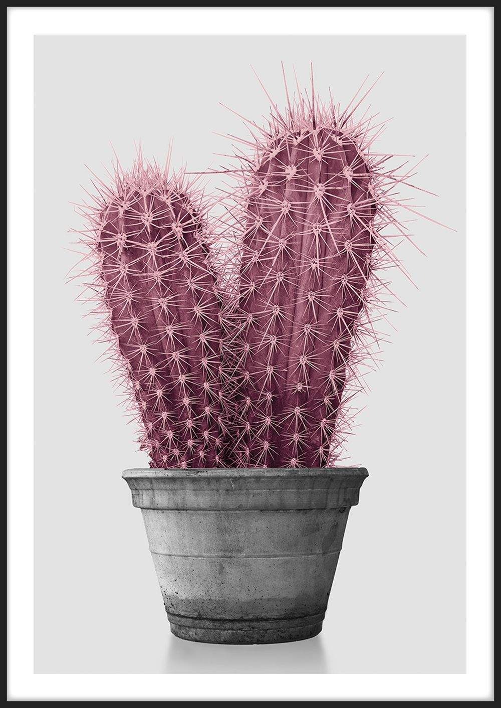 Photo of Pink Cactus, made by Insplendor©