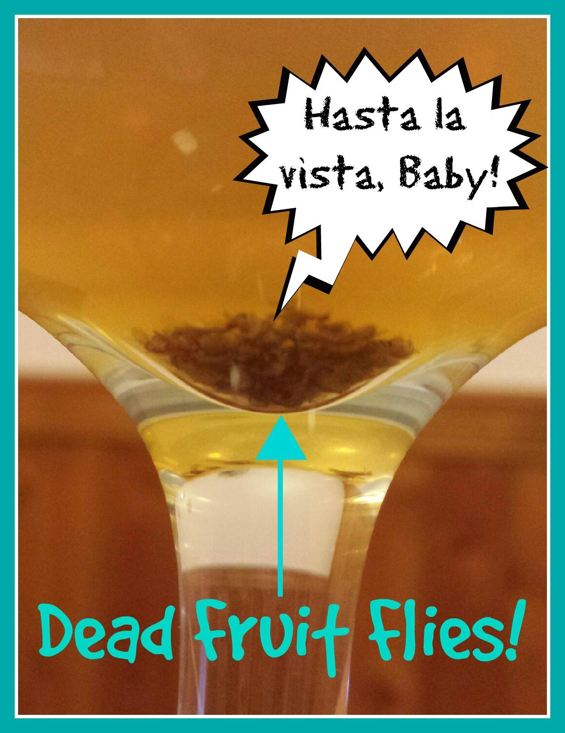 The flyest fruit fly trap ever dr sistathangsays diy