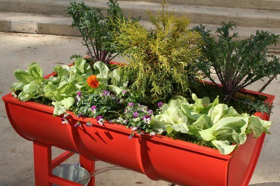 Pinterest & Planters Made from Recycled Oil Drums - Picture of The Muse ...