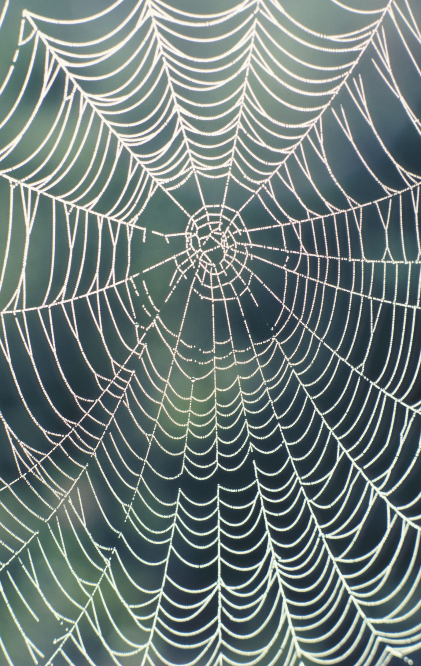 How To Make A Realistic Spider Web Decorating Ideas Fake Spider