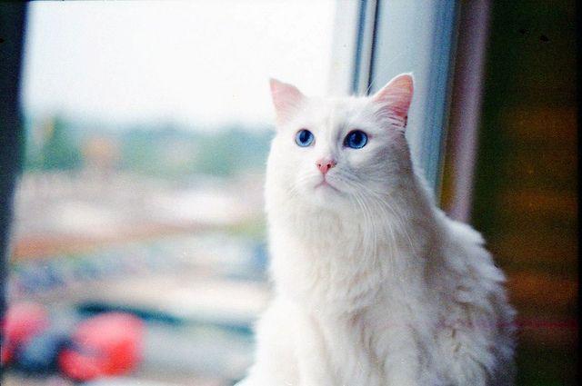 Cat Charlie | Flickr – Condivisione di foto!