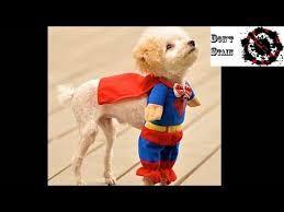 Resultado de imagen para disfraz de perros