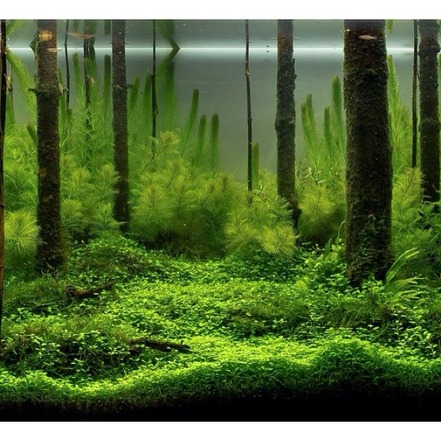 Forest Aquascape: A Fishy Idea For The Wet Ones!