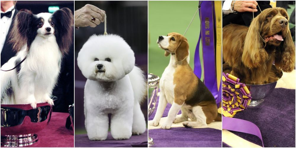 These Photos Of The Westminster Dog Show Winners Throughout The