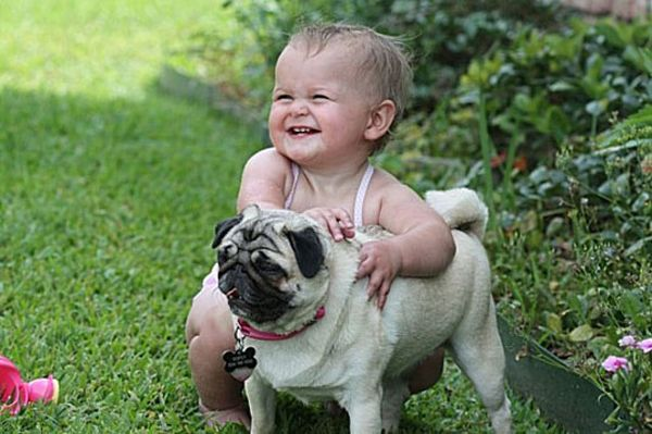 Pug Is My Best Friend Pics Of Pugs And Kids Together Baby Dogs