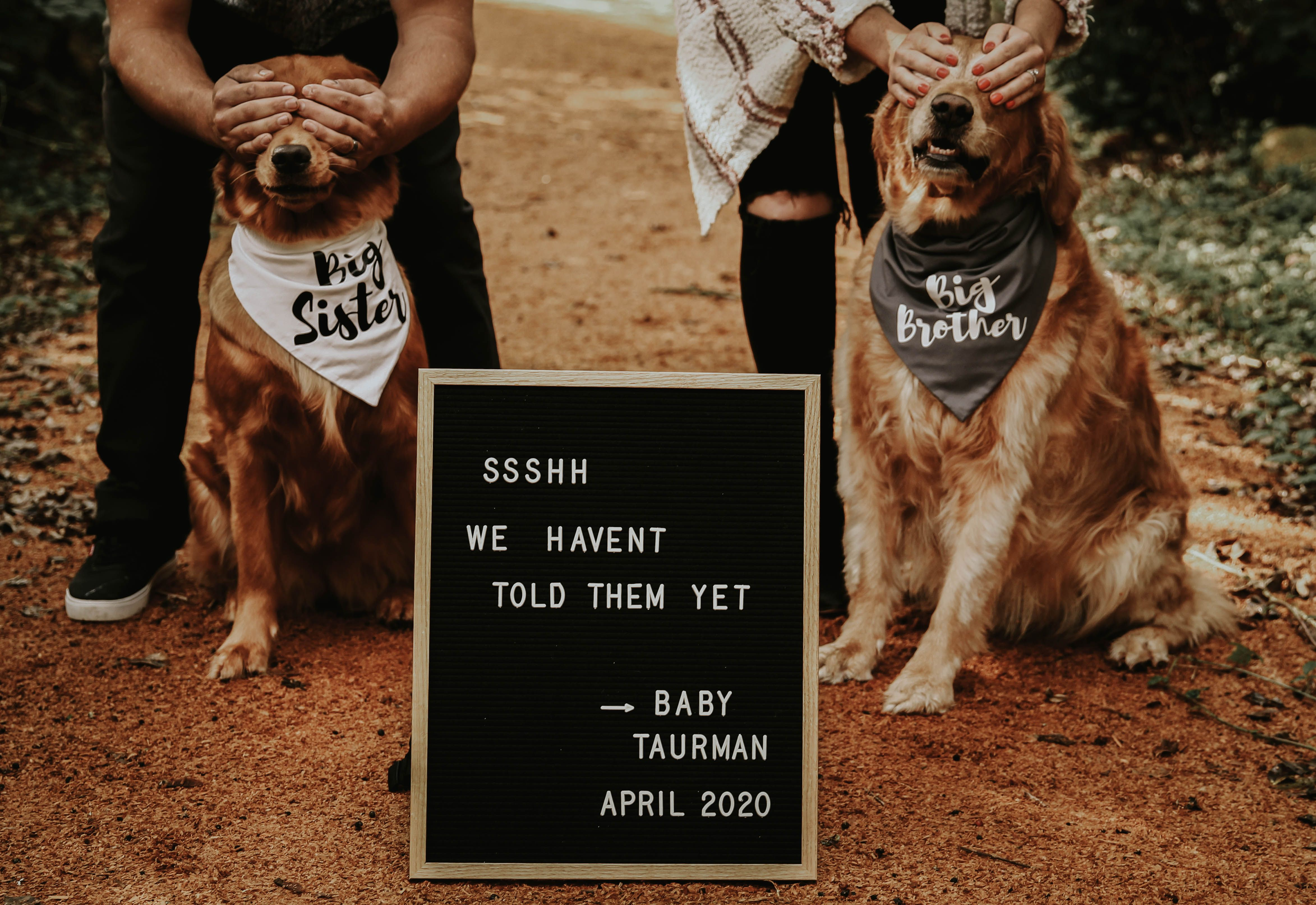 Baby Announcement Pictures With Dogs