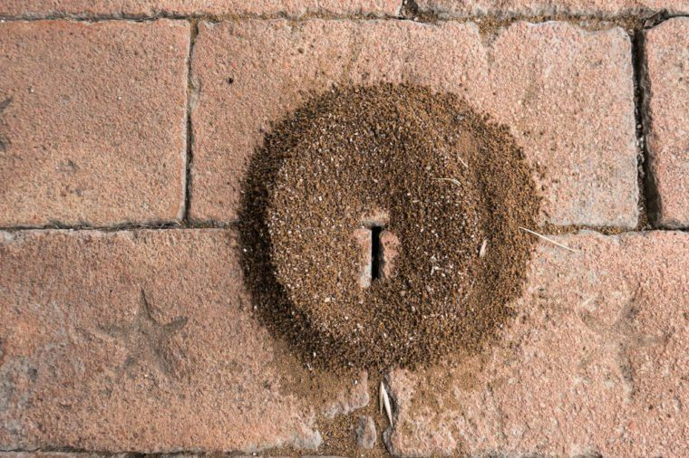 15 Sneaky Signs Your Home S About To Be Infested Termite Infestation