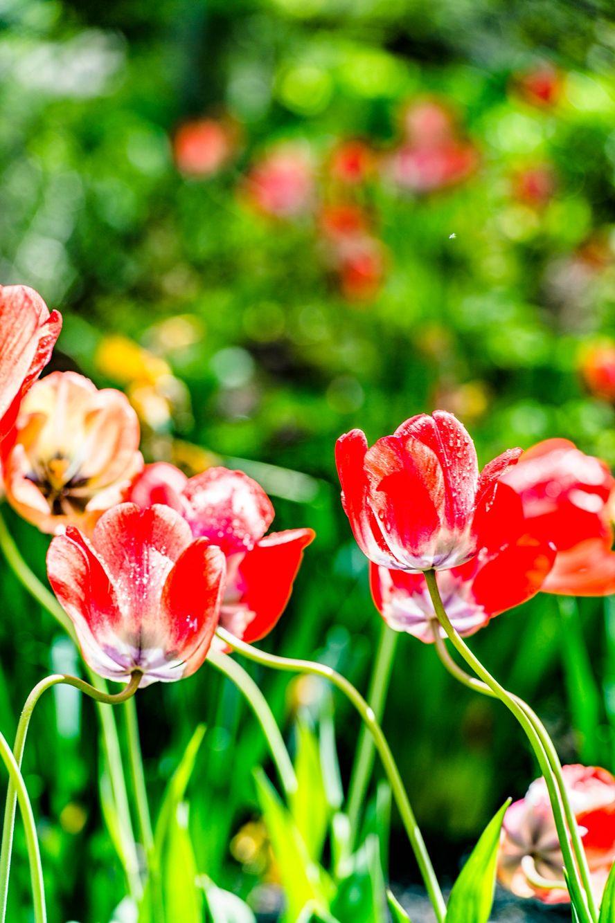 #flower #꽃 #yellowstonenationalpark #grandtetonnationalpark #jacksonhole #follow4follow #follow #followme #followforfollow #followyou #맞팔환영 #맞팔해요 #선팔하면맞팔