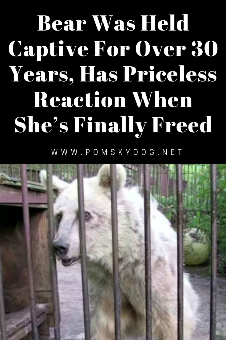 Bear Was Held Captive For Over 30 Years Has Priceless Reaction When She S Finally Freed Animal Stories Wild Animal Sanctuary Pets
