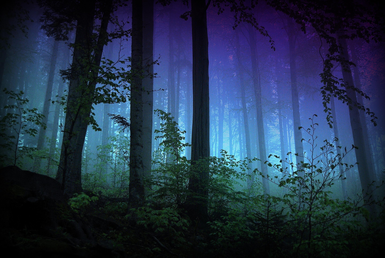 Foret Enchantee Degrade De Couleurs Wallpaper Forest Magic Mystique Mystical Enchanted Wood Foret Enchantee Dessins Techniques De Mode Couleurs D Hiver