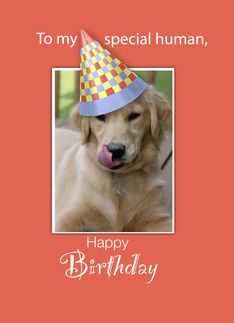 Happy Birthday From Your Dog