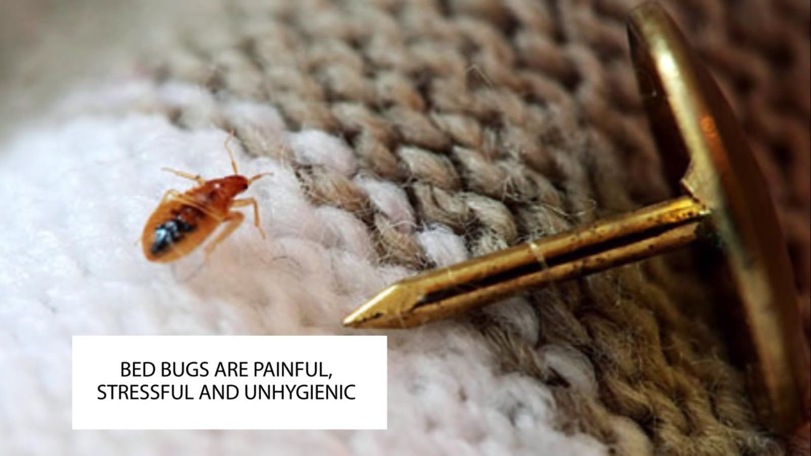 http//www.pestcontrol4london.co.uk/bedbugspestcontrol