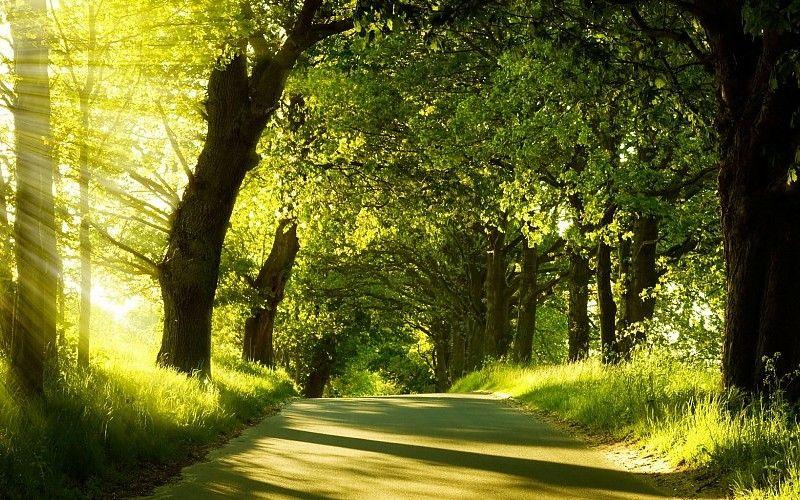 morning-nature-hd-wallpapers-best-desktop-background-photographs-widescreen-397520.jpg (800×500)