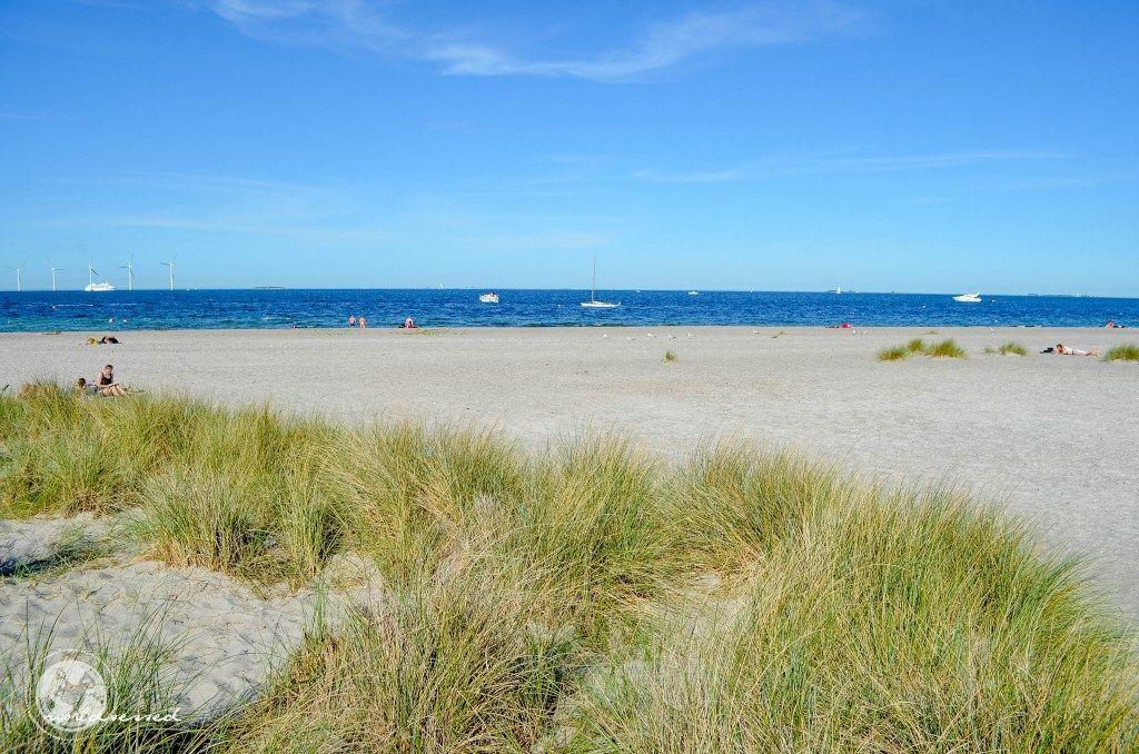 Strand 2 (1 von 1)