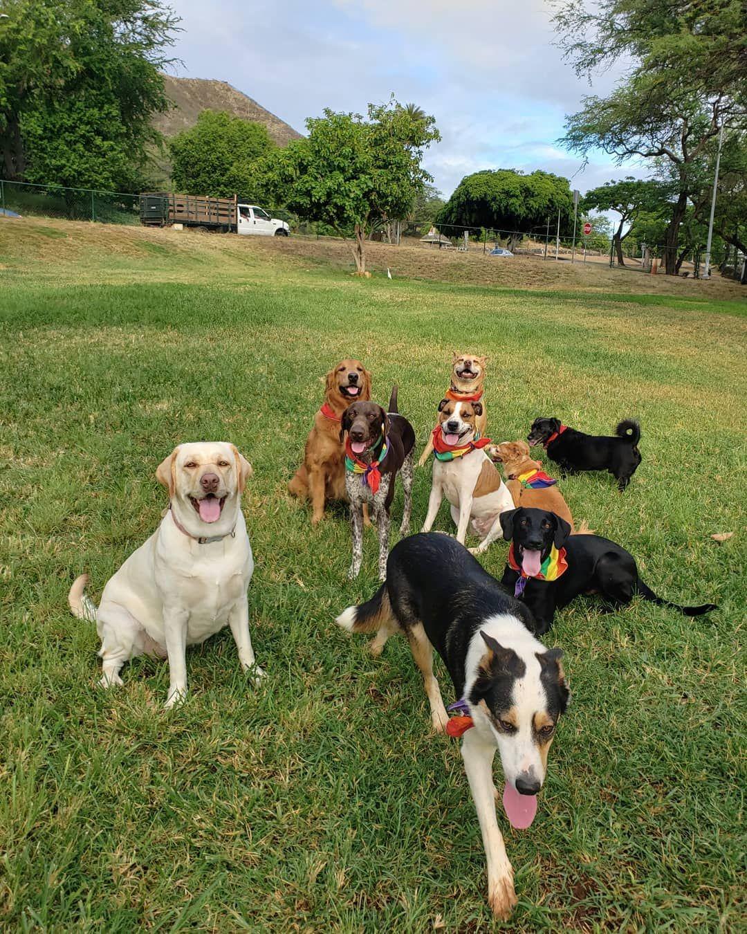 Occy Day Alohadoggyvacay Wooftv Dogposse Dogsitterlife