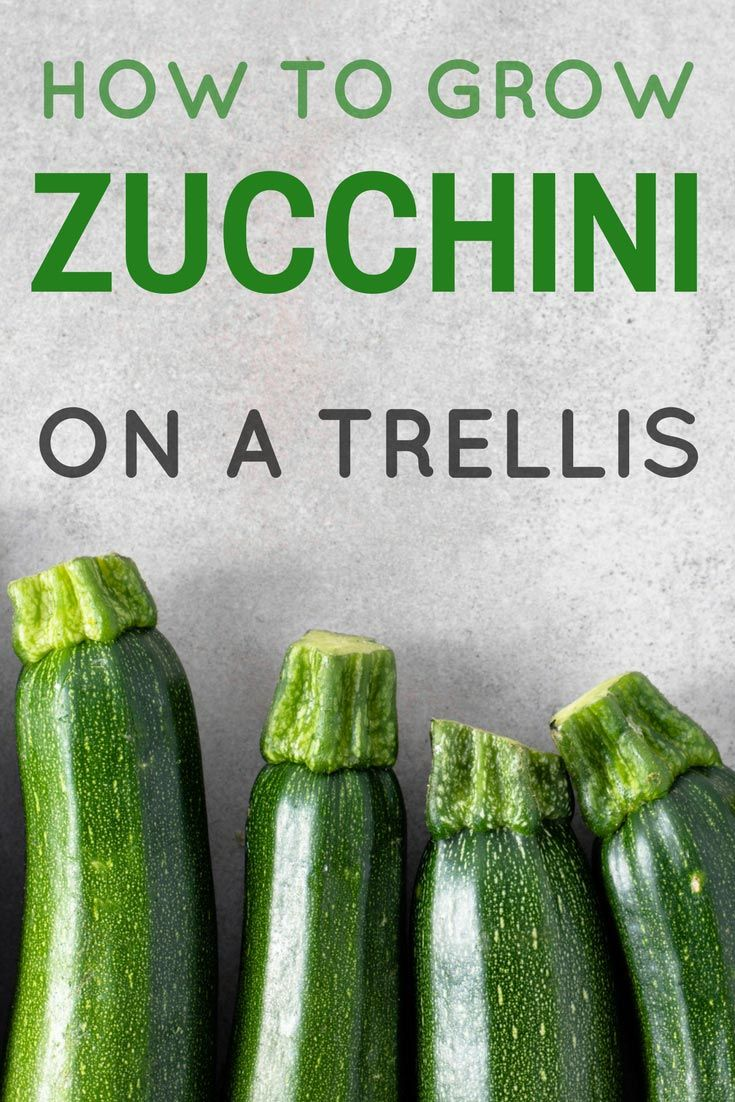 Up, Up And Away! - How To Grow Zucchini On A Trellis ...