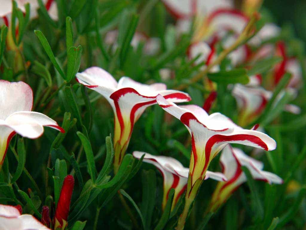 25 plus most beautiful flowers of the world beautiful - Beautiful flower images wallpapers ...