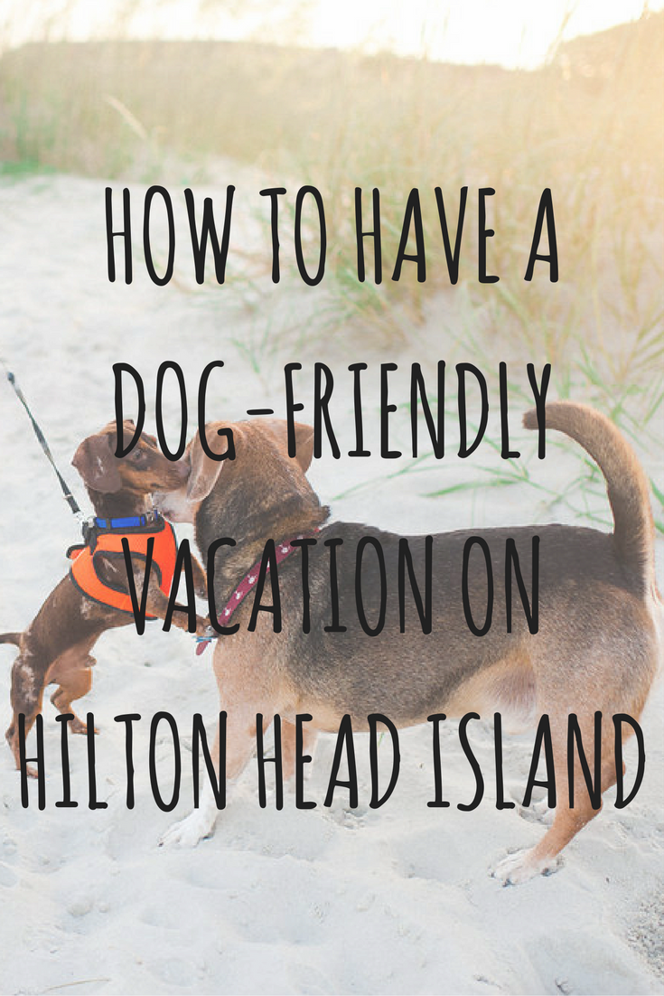 Want to have a dog-friendly #vacation? Hilton Head Island is a dream destination! Here's our pet-friendly #travel #guide. #dogs #pets #hiltonhead #southcarolina #familytravel
