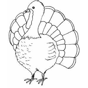 turkey templates printable turkey coloring page holiday