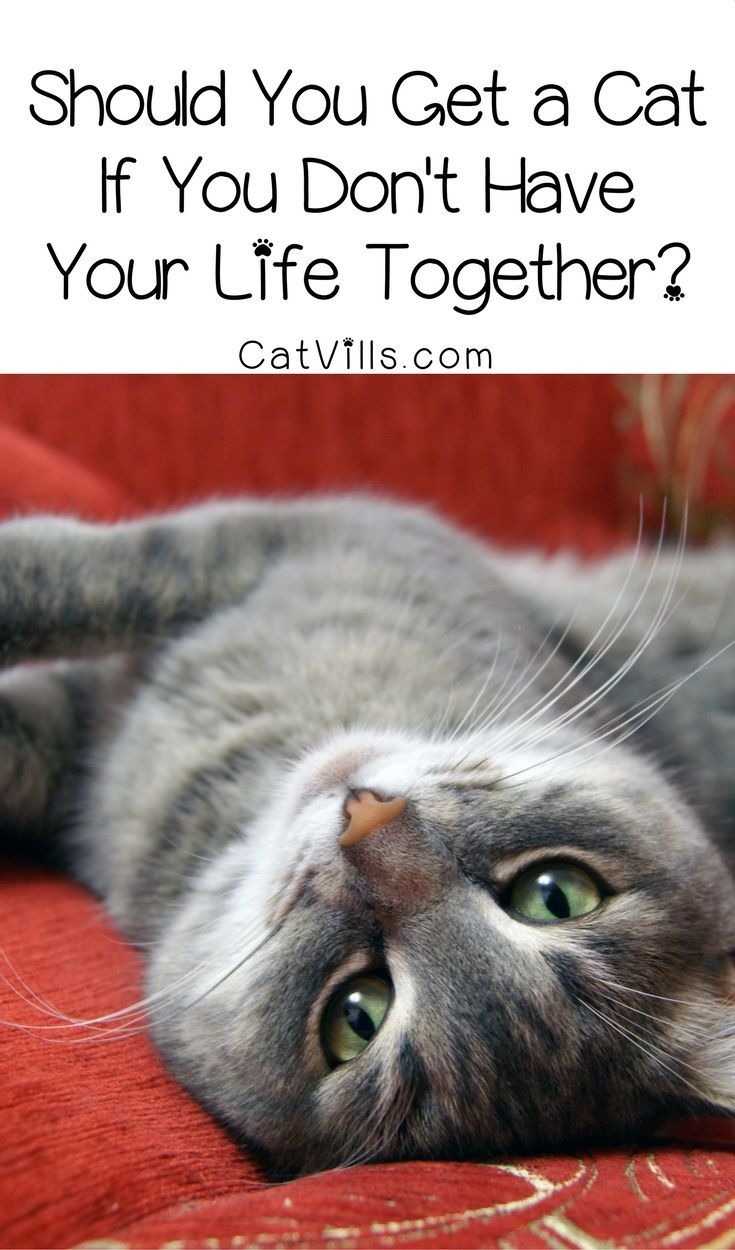 Should You Get A Cat If You Don T Have Your Life Together Catvills Cat Love Cat Care Tips Cat Care