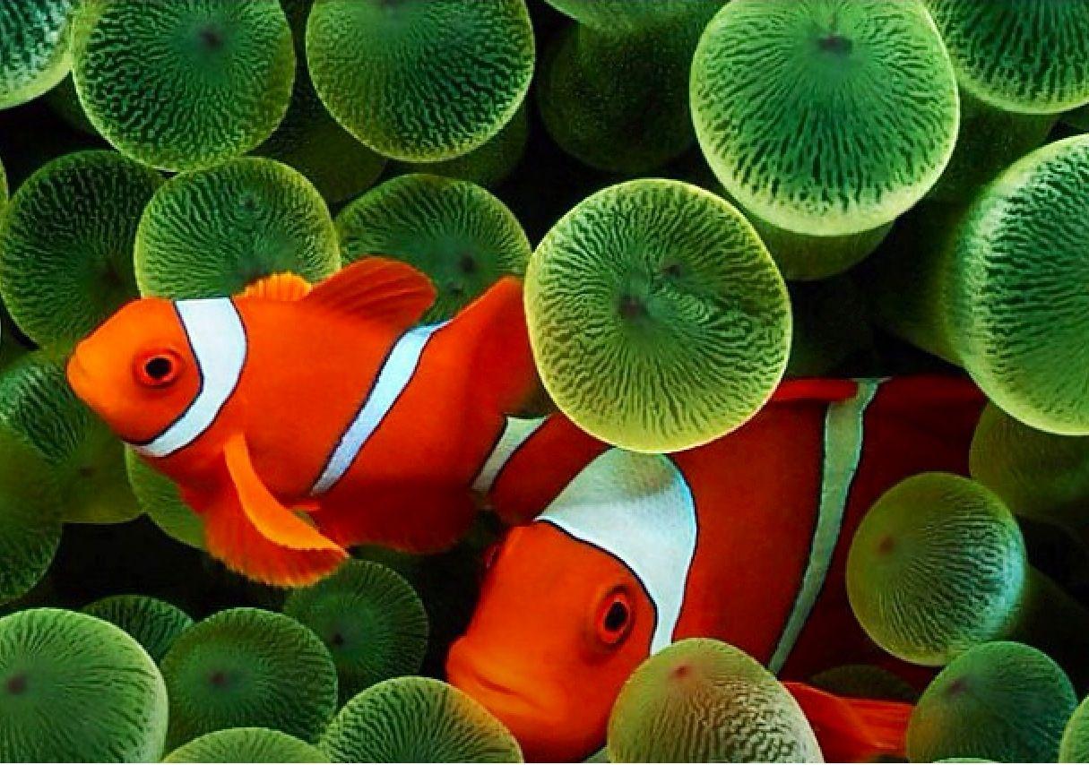 Bold fish color.. Nemo??? | ~~Extreme Colors~~ | Pinterest