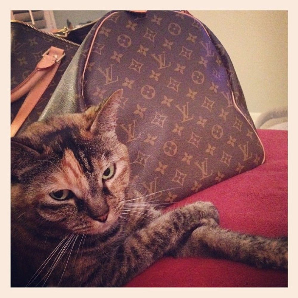 Prissy Kitty  Louis Vuitton... need I say more?
