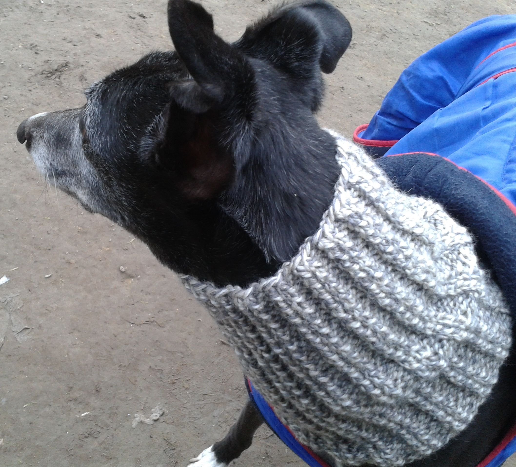 Free pattern for a snood for a retired greyhound httpwww free pattern for a snood for a retired greyhound httpravelry bankloansurffo Images