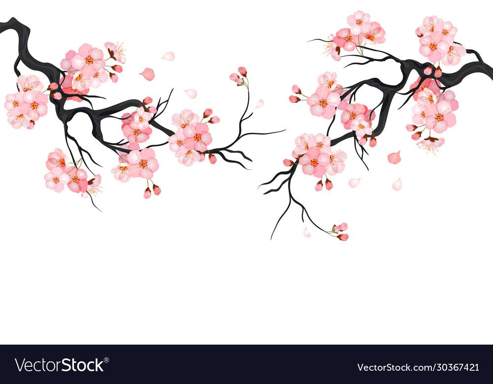 Japanese Cherry Sakura Tree Isolated Background Branch With Blossom Flowers Vector Illustration Downlo In 2021 Cherry Blossom Art Sakura Tree Cherry Blossom Drawing