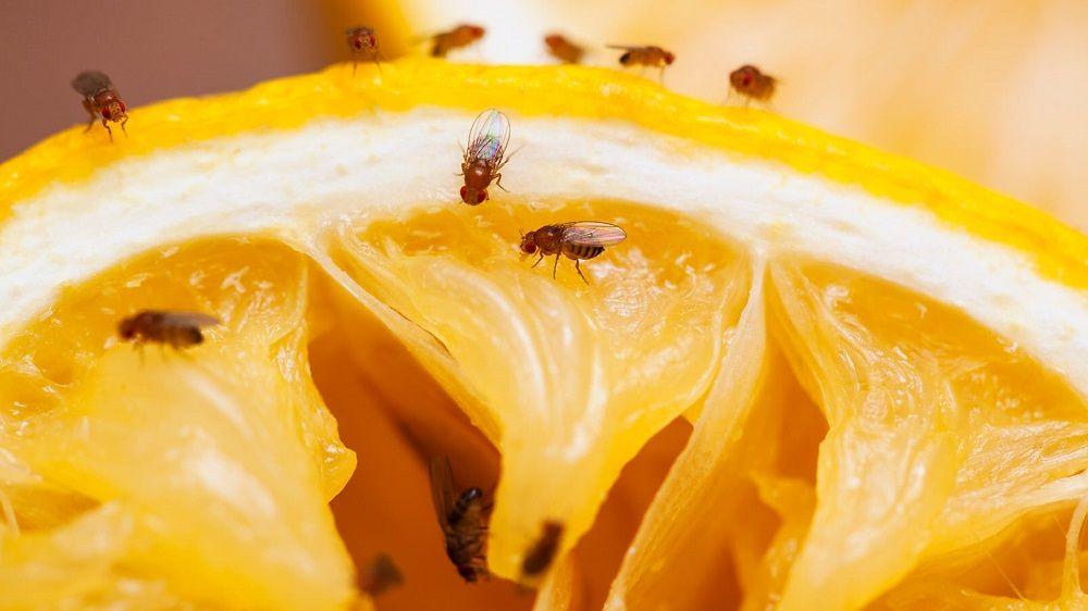 4 astuces pour se débarrasser des moucherons dans la cuisine - m6