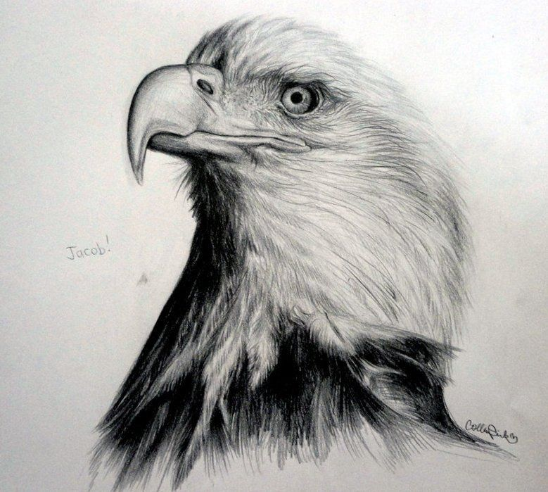 Realistic Pencil Drawings By Callie Fink