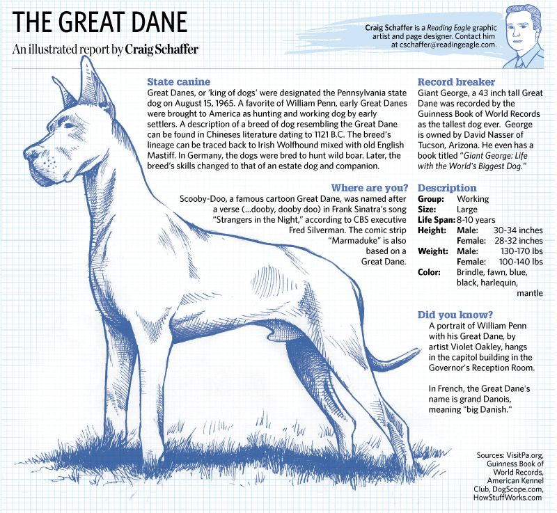 Sketchbook Feb 6 A Look At The Great Dane The Pennsylvania