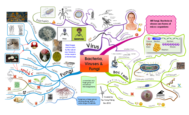 Chapter 18 Viruses And Bacteria Worksheet Answers ...