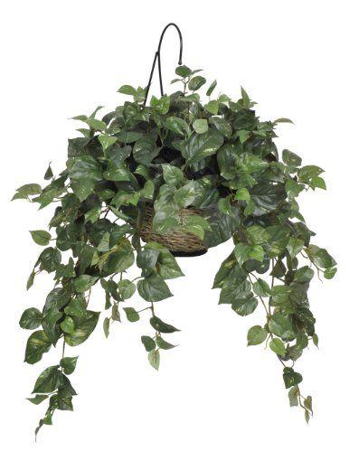 House of silk flowers artificial pothos hanging basket you can house of silk flowers artificial pothos hanging basket you can get more details by mightylinksfo