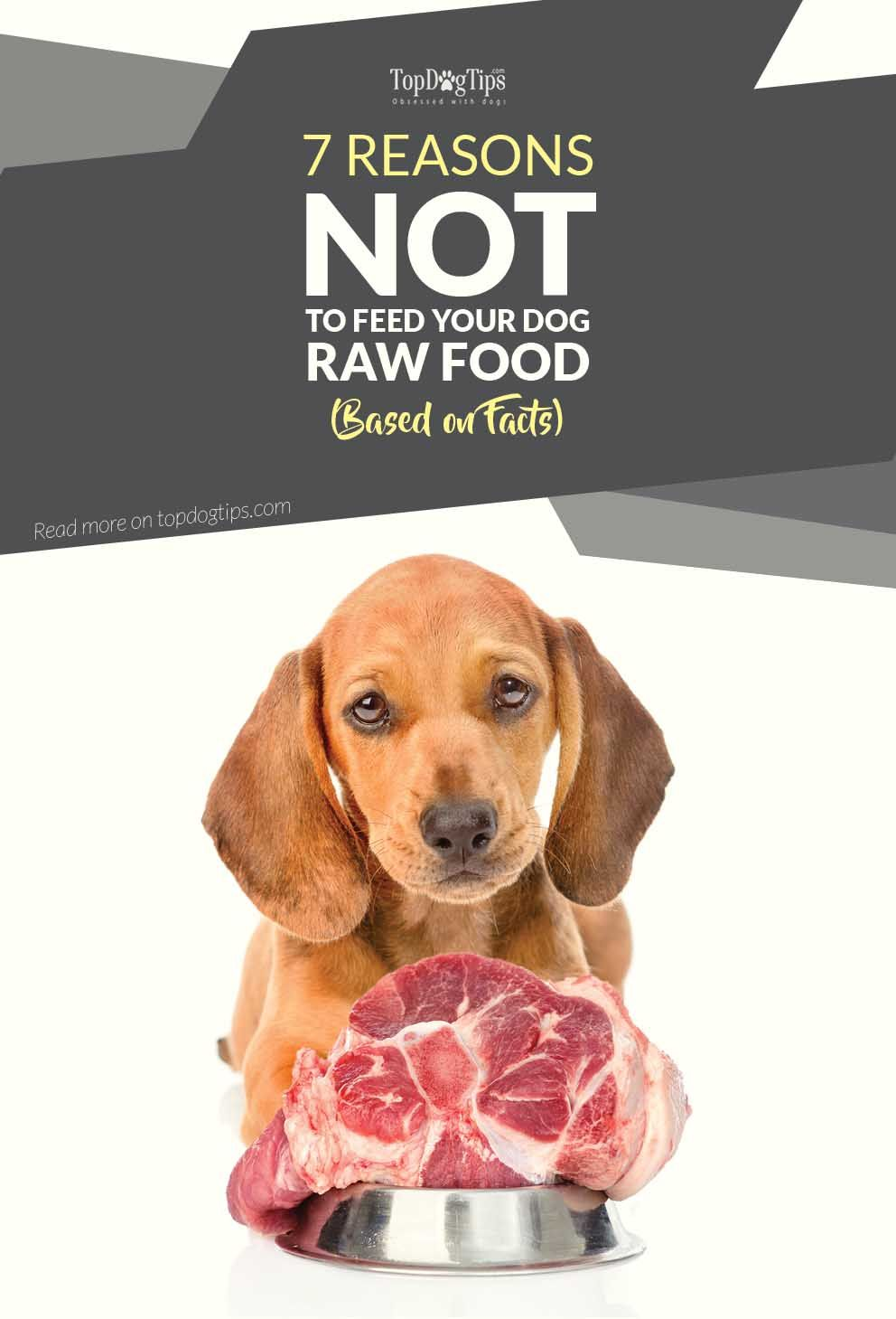 7 Reasons Not To Feed Your Dog Raw Dog Food Based On Facts Dog