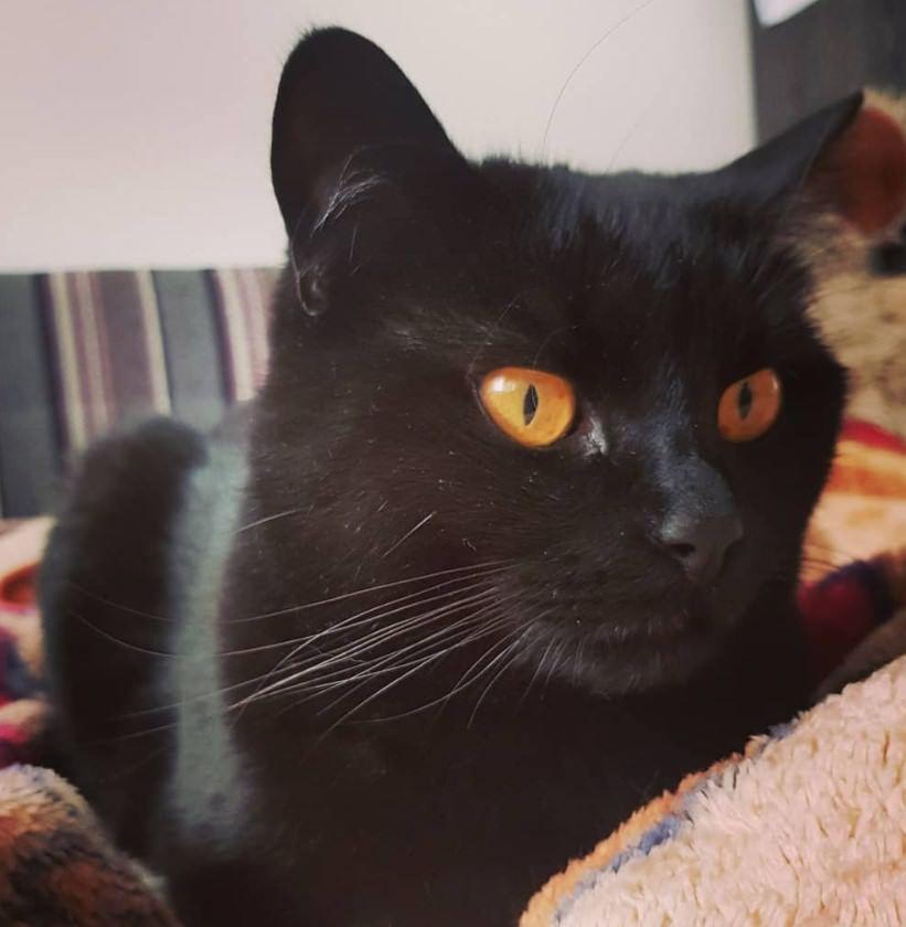 135 Black Boy Cat Names Grey Cat Names Boy Cat Names Cat Names