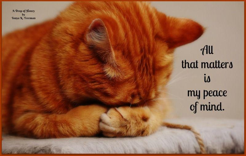 Pin By Tonya K Freeman On Drops Of Honey Cats Orange Tabby