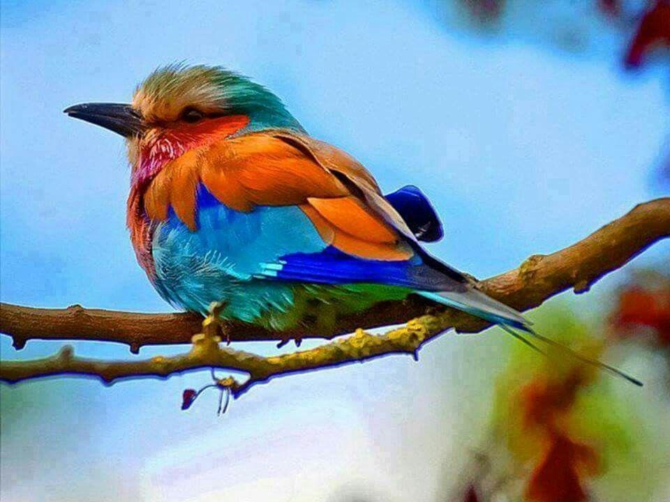 This bird is so beautiful ❤