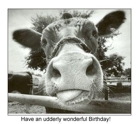 Funny Birthday Card Sayings – Comical Birthday Greetings