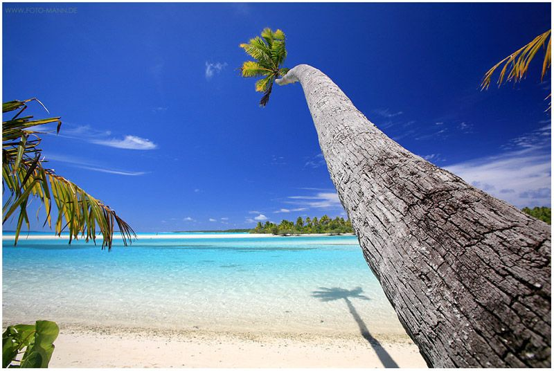 Coconut Tree, One Foot Island, Aitutaki