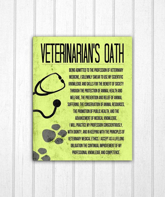 This Item Is Unavailable Etsy Vet Medicine Vet Clinics Veterinarian