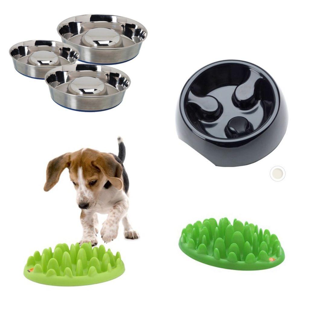 gamelle anti glouton id es pour chien pinterest chien gamelle chien et gamelle. Black Bedroom Furniture Sets. Home Design Ideas
