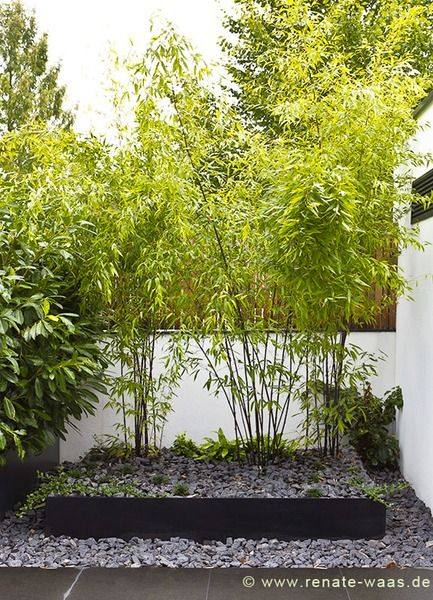Beet Moderner Garten Bambus Eingang moderner Garten Basaltschotter ...