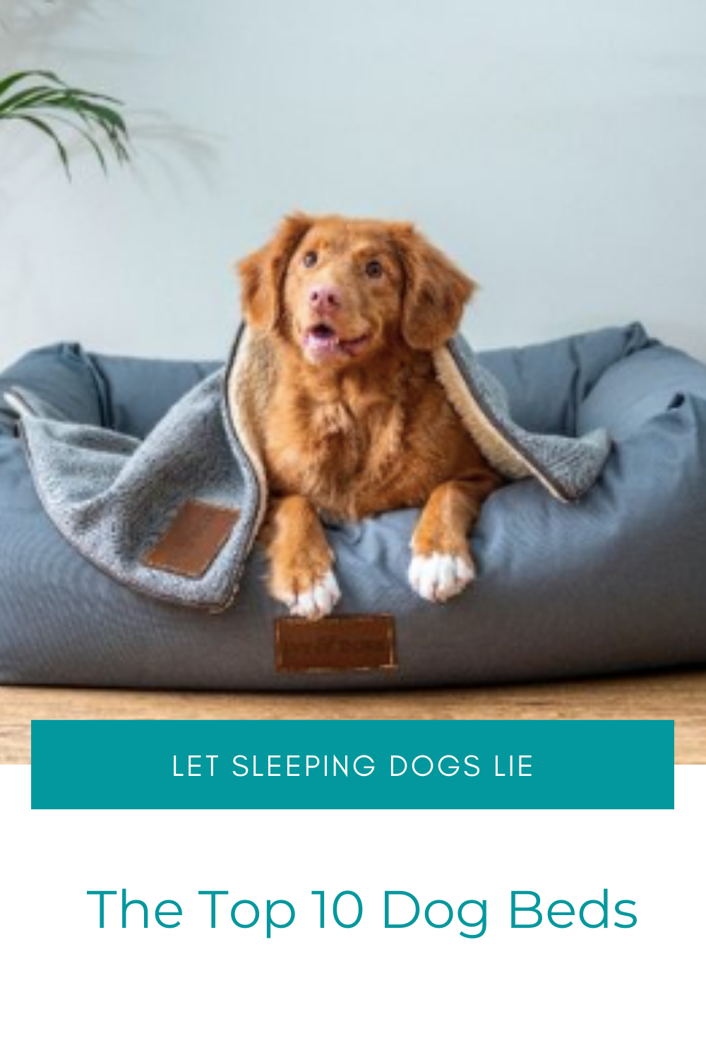 Top 10 Dog Beds in the UK in 2020 Dog bed, Stylish dog