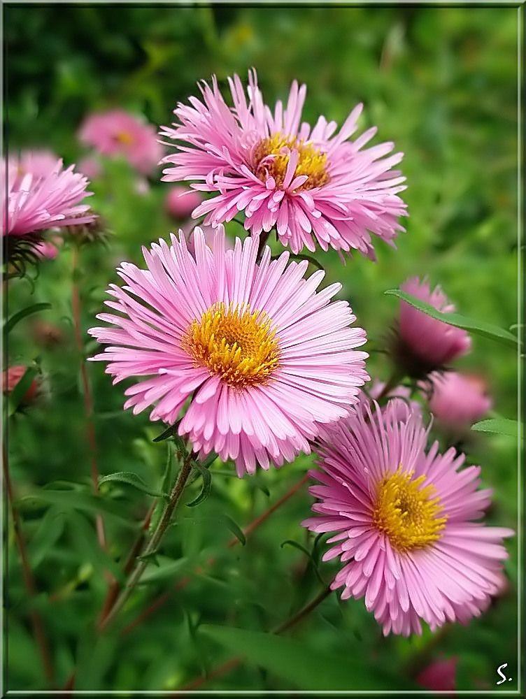 summer's end by grandmaS Belas flores, Flores