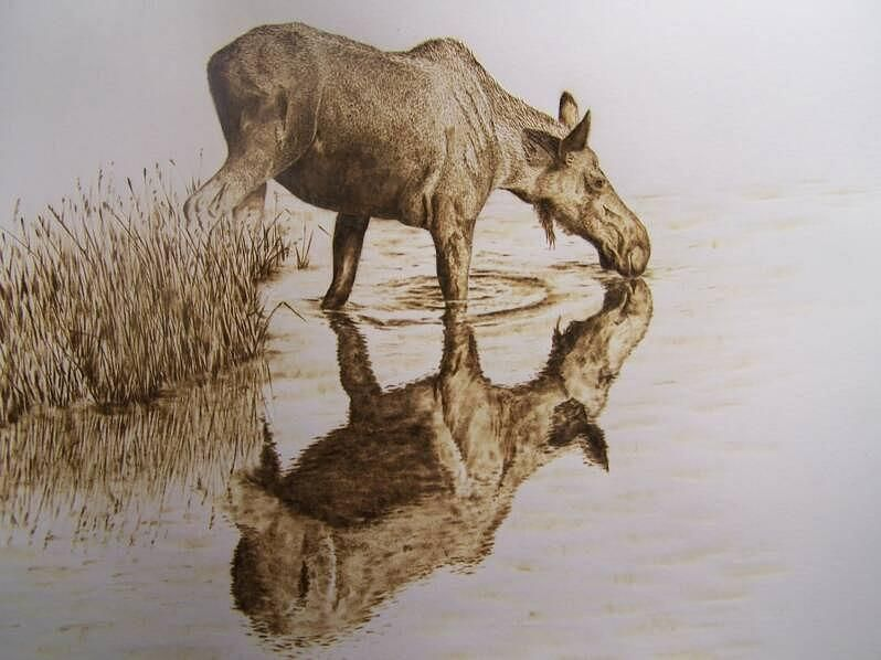 Adam Owen-Moose Cow Taking A Drink Pyrography
