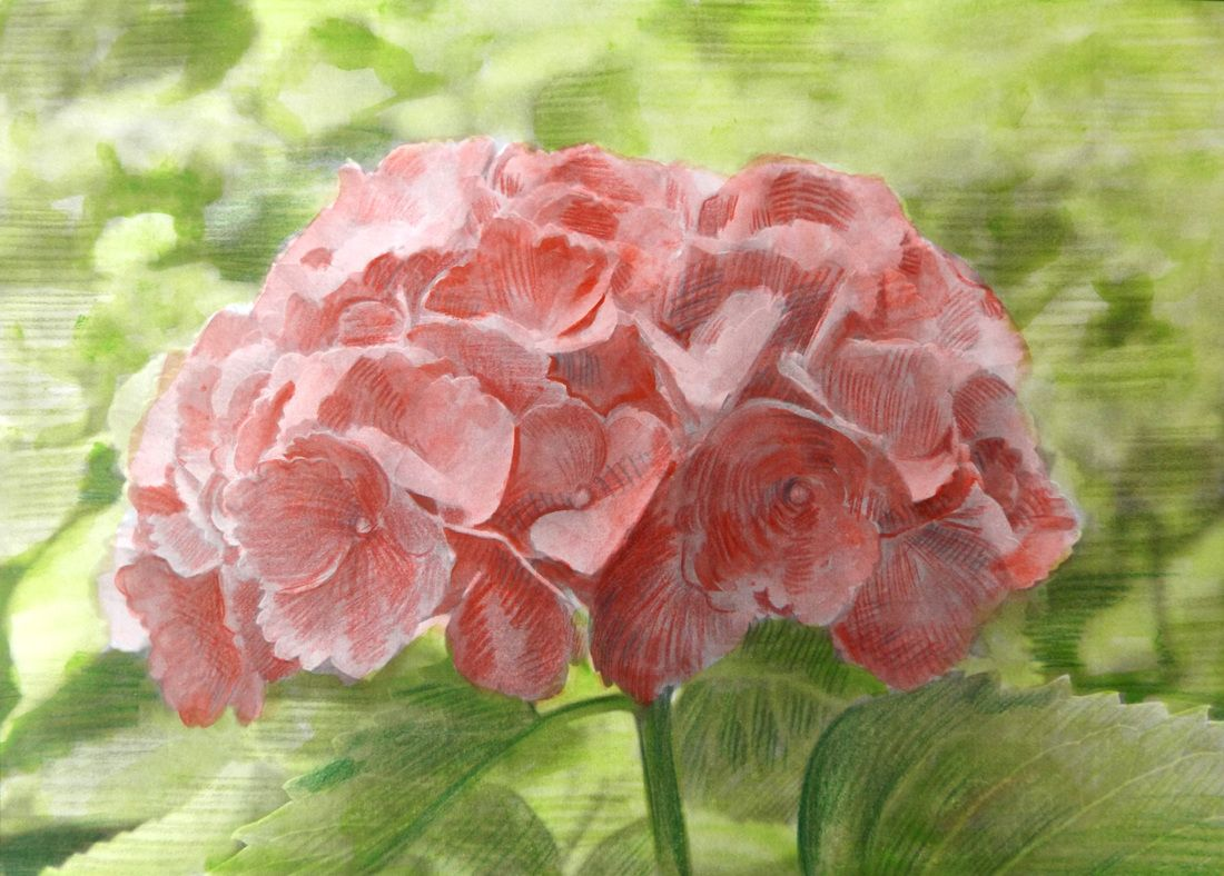 View the different ways people have colored the hydrangea flower ...