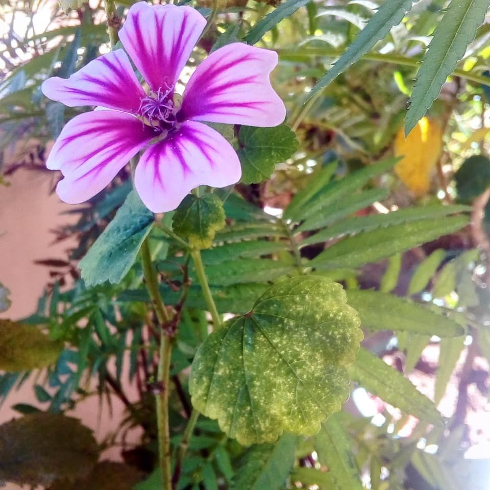 cb7d4cb28a9d Nature love.. 🌲😉 . . .  natural  nature  naturalbeauty  naturelovers   nature perfection  nature good naturephotography  nature good  environment  ...