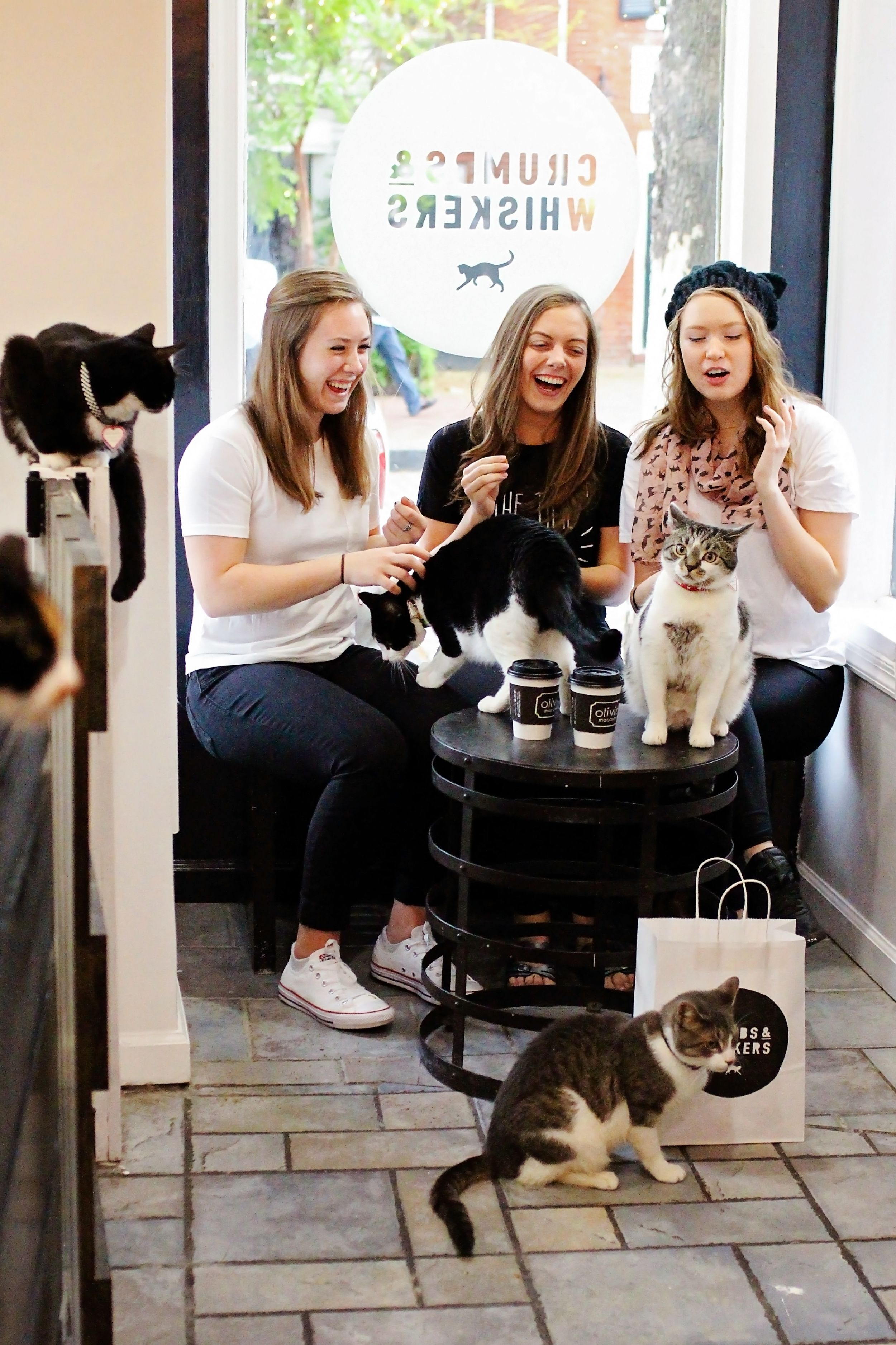 Pin By Black Cats Rule On Cat Cafe Cat Cafe Crazy Cats Crazy Cat Lady